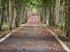 树林 道路 落叶 自然 树木 5K风景壁纸