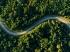 森林公路 航拍风景4k壁纸护眼